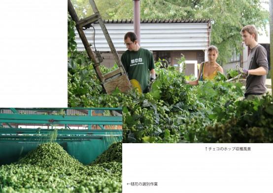 ホップ収穫風景(注釈入)