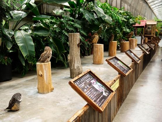 鳥は朝の方が活発なので午前中がおすすめ。午後になると寝ているかほとんど動かない