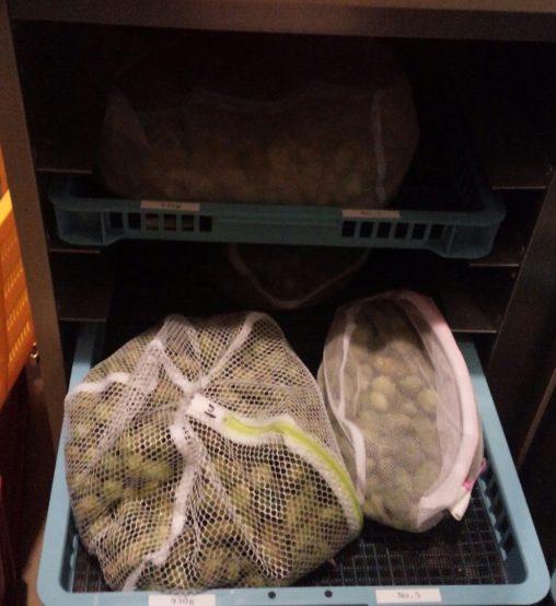 摘んだホップは後日、仕込まれ、ゼウスビターの原料となる。