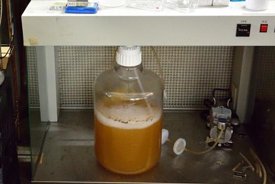 培養室では酵母を培養している。